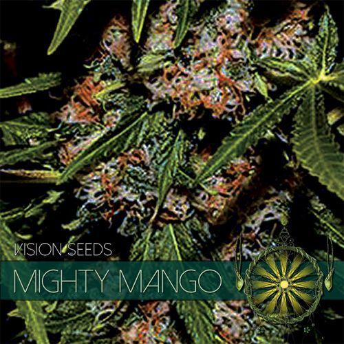 Vision Seeds Mighty Mango Bud