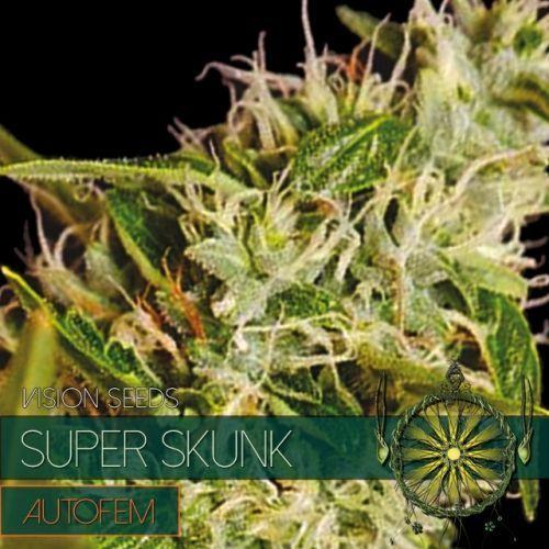 Vision Seeds Super Skunk Auto