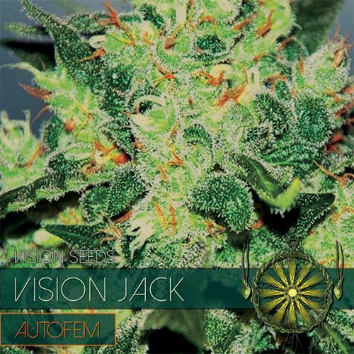 Vision Seeds Vision Jack Auto