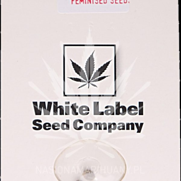 Skunk #1 Automatic White Label Seed Company