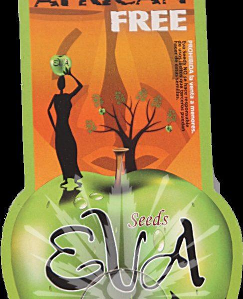 Veneno Eva Seeds