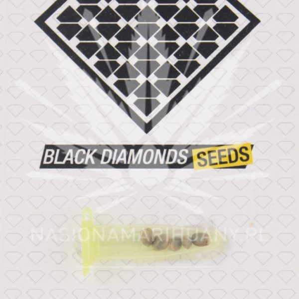 AUTO Maxi Gum (CR x AK) Black Diamonds Seeds