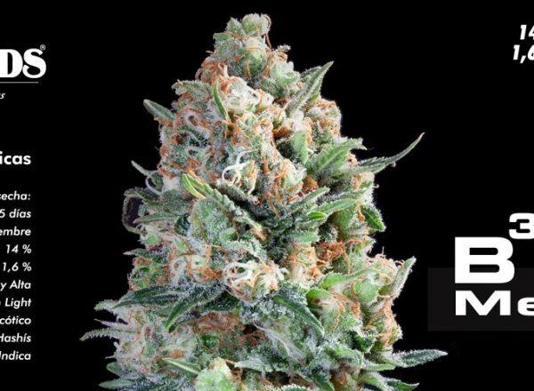 B3 Medical Pure Seeds