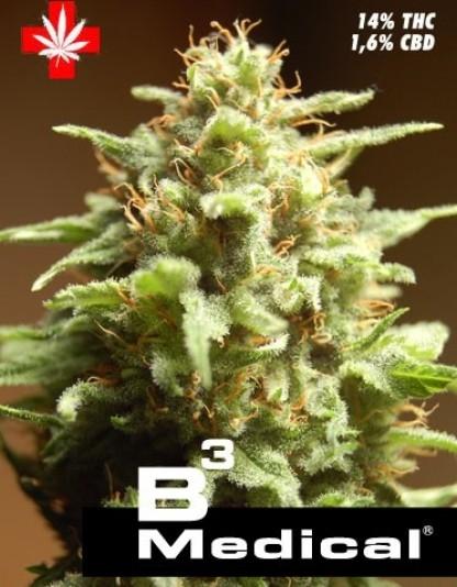 Pure Seeds B3 Medical
