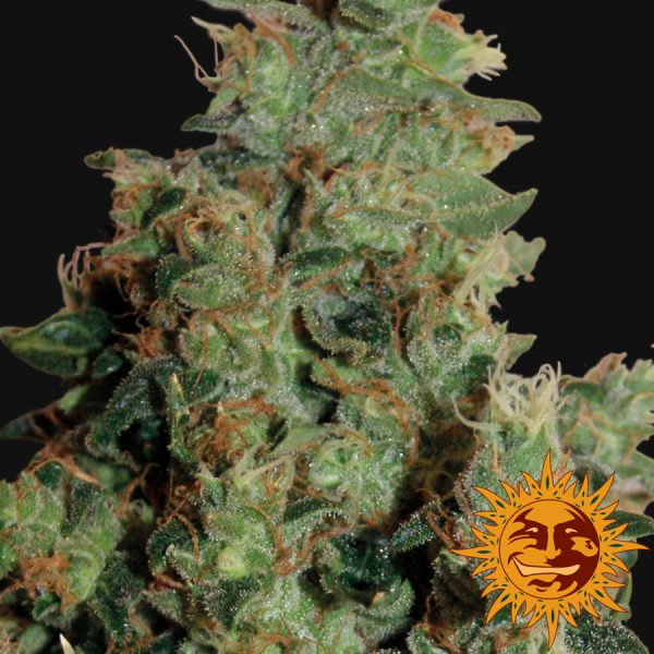 Tangerine Dream Barney's Farm