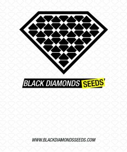Black Diamonds Seeds Lowryder AUTO