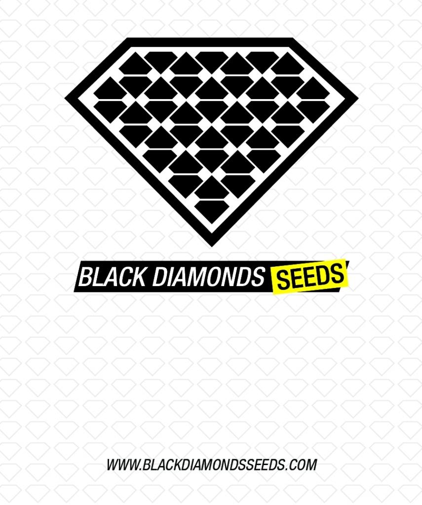 Black Diamonds Seeds Cheese AUTO