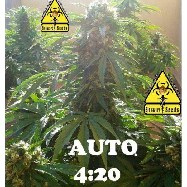 Auto 4:20 Biohazard Seeds