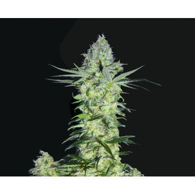 Biohazard Seeds Goddess Kali