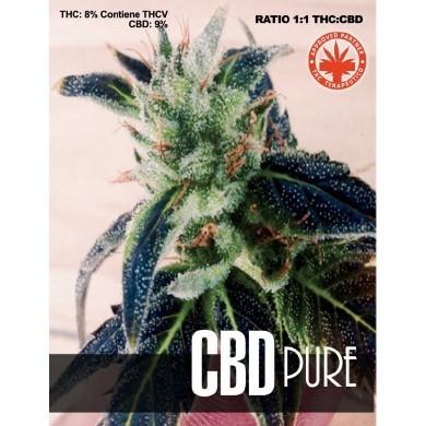Pure Seeds CBD Pure