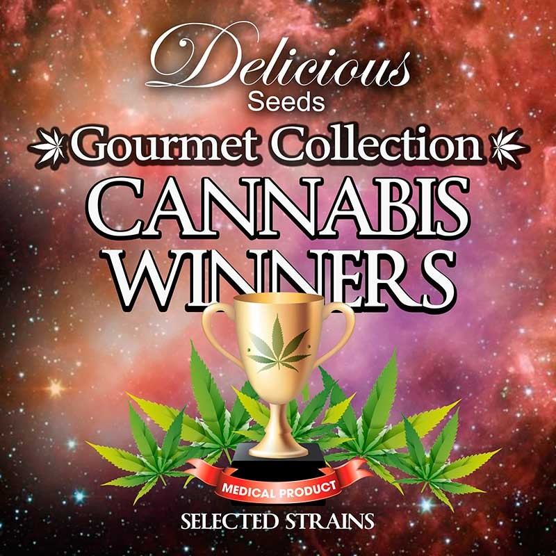 Delicious Seeds Gourmet Collection Cannabis Winner Strains 2
