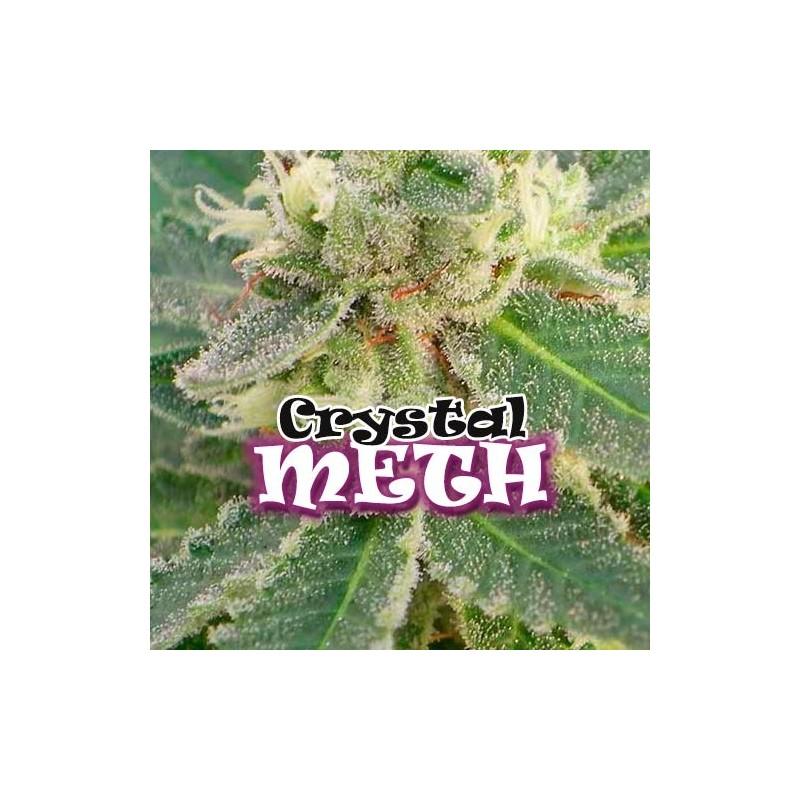 Dr. Underground Crystal M.E.T.H.
