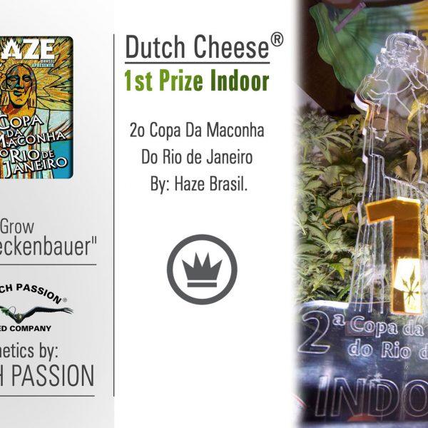 Dutch Cheese Holandia