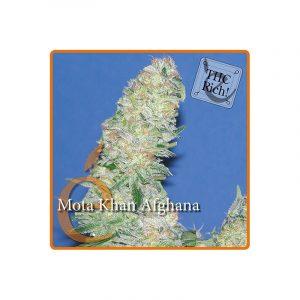 Elite Seeds Afghan Mota Khan
