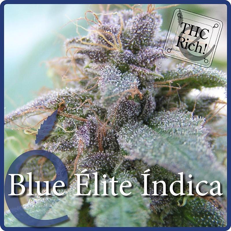 Elite Seeds Blue Elite Indica