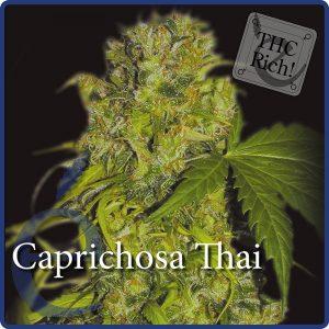 Elite Seeds Caprichosa Thai