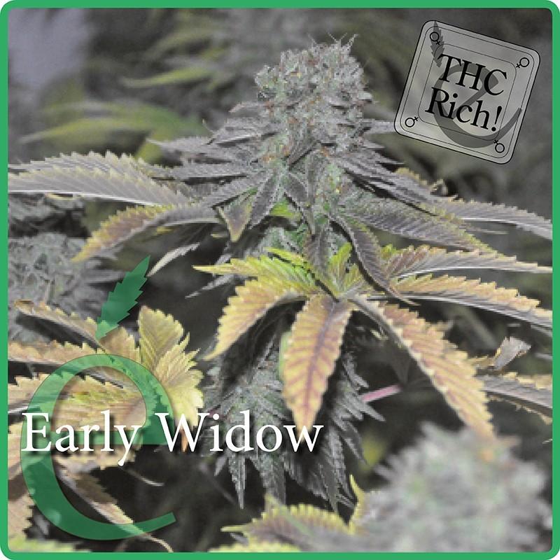 Elite Seeds Early Widow