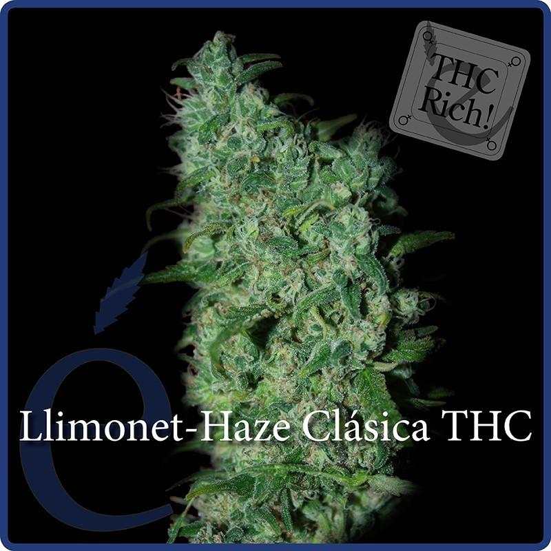 Elite Seeds Llimonet Haze  Classic THC