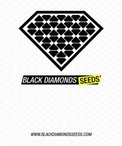 Black Diamonds Seeds Diamond Skunk AUTO