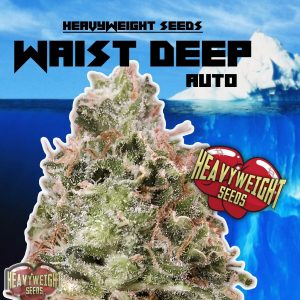 Heavyweight Seeds Waist Deep Auto