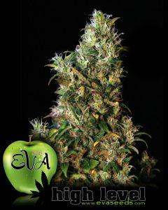 Eva Seeds High Level
