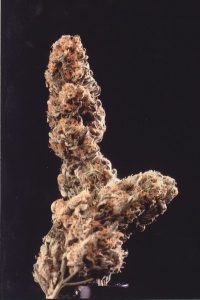 KC Brains Afghani Special