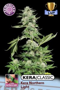 Kera Seeds Kera Northern Light