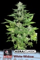 Kera Seeds Kera White Widow