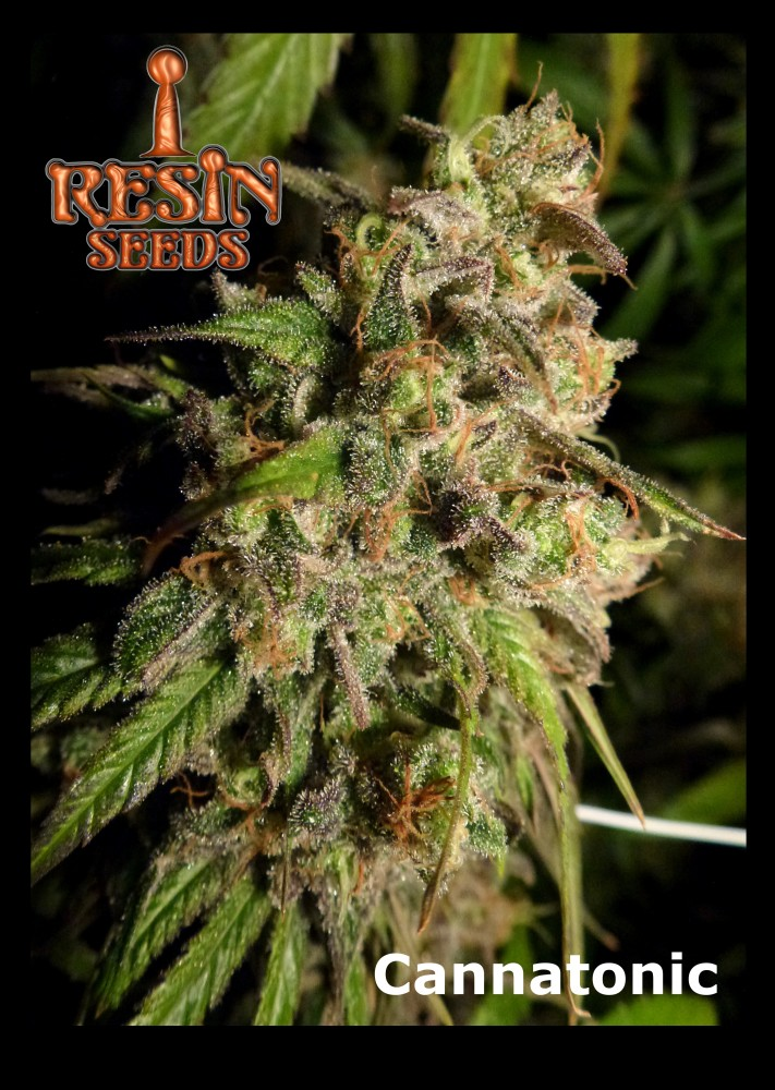Resin Seeds Cannatonic