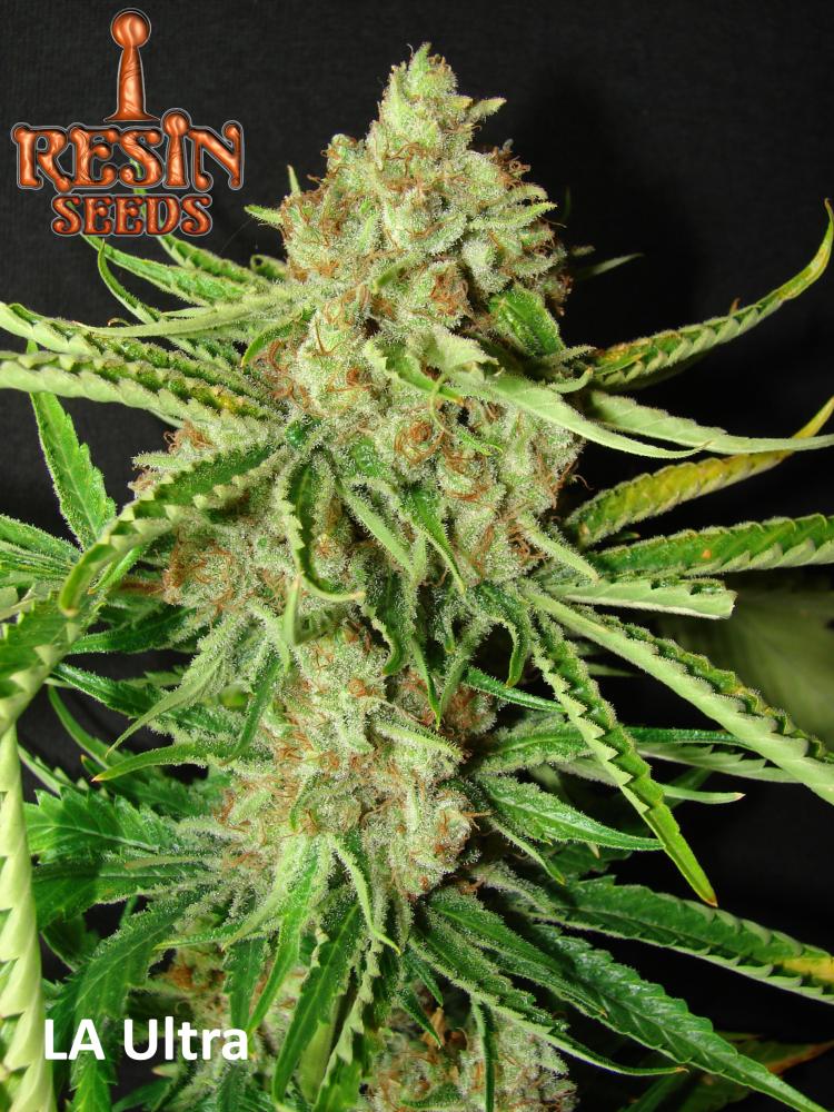Resin Seeds L. A Ultra