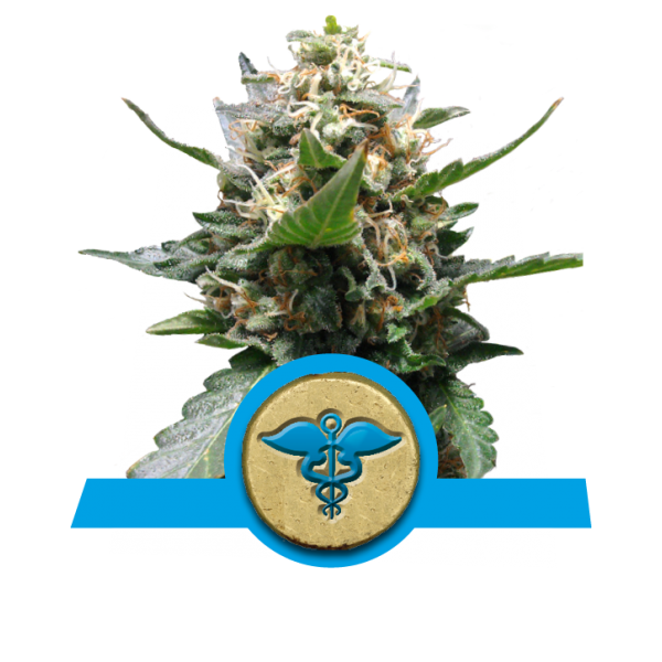 Royal Queen Seeds Royal Medic