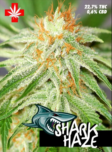 Pure Seeds Shark Haze