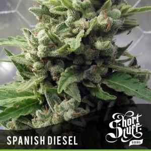 Short Stuff Seedbank Auto Spanish Diesel