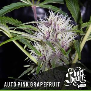 Short Stuff Seedbank Auto Pink Grapefruit