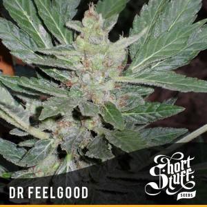 Short Stuff Seedbank Dr. Feelgood