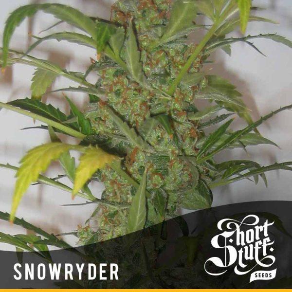 Snowryder Hiszpania