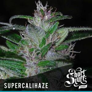 Short Stuff Seedbank Super Cali Haze