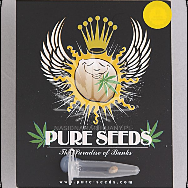 Thc Autofloreciente Pure Seeds