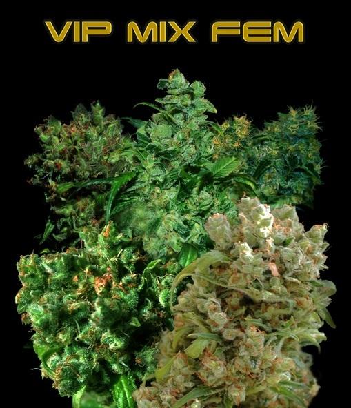 VIP Seeds VIP Mix