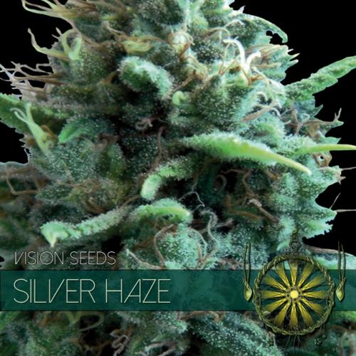 Vision Seeds Silver Haze