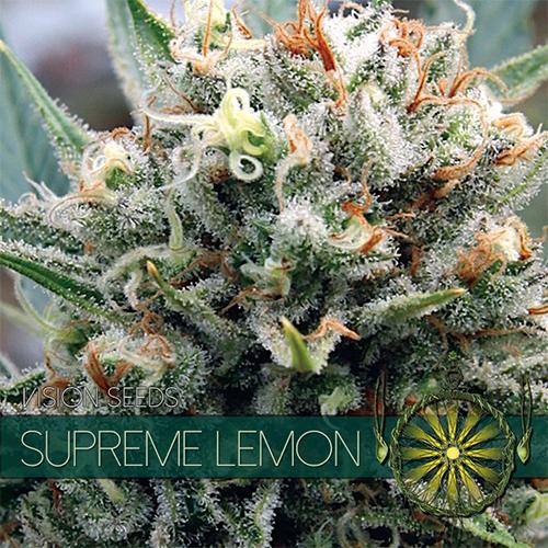 Vision Seeds Supreme Lemon