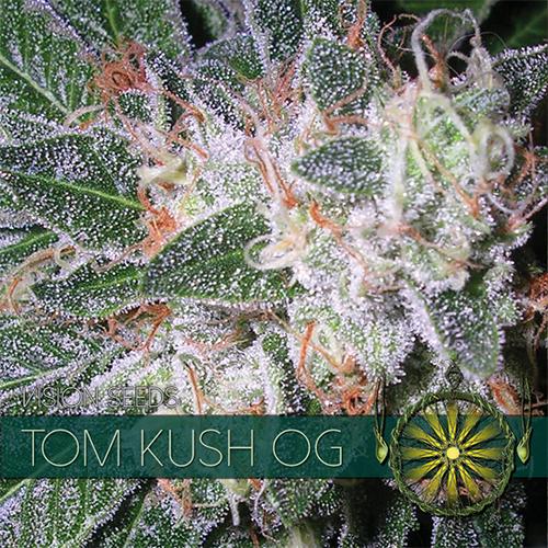 Vision Seeds Tom Kush Og