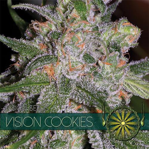 Vision Seeds Vision Cookies