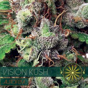 Vision Seeds Vision Kush Auto