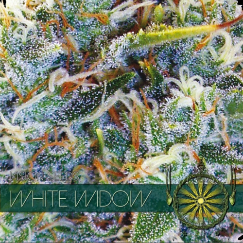Vision Seeds White Widow