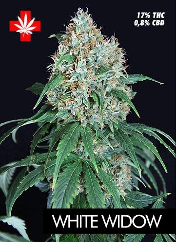 Pure Seeds White Widow