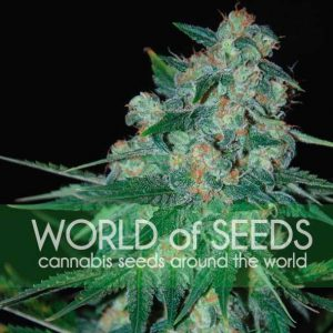 World of Seeds Ketama