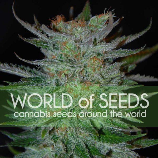 New York 47 World of Seeds