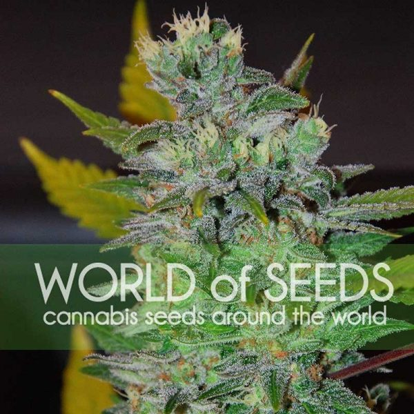 Space World of Seeds