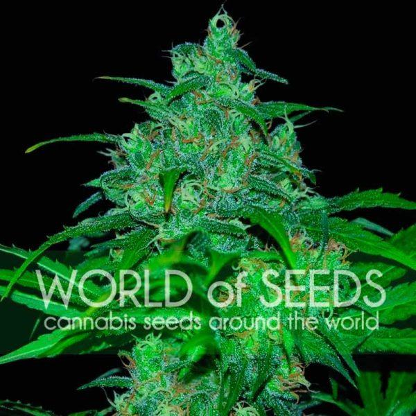 Wild Thailand World of Seeds